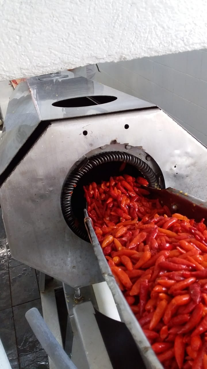 Malagueta peppers being cleaned