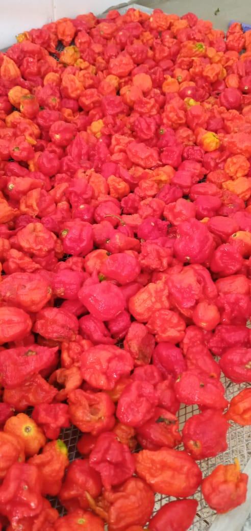 Carolina reaper pepper natural